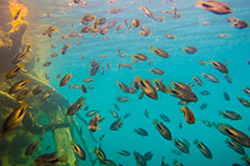 Progreso Snorkeling