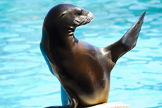 Puerto Vallarta Sea Lion Encounter