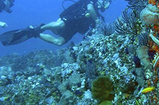 Puerto Vallarta Certified Scuba Diving cruise excursion