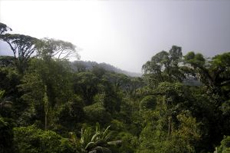 Puntarenas (Puerto Caldera) Rainforest Tour