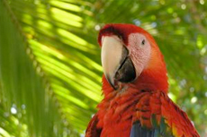 Puntarenas (Puerto Caldera) River Cruise & Scarlet Macaw Sanctuary cruise excursion