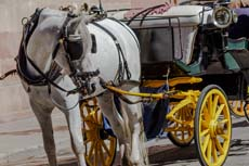 Quebec City Horsedrawn Carriage Tour