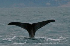 Reykjavik Whale Watching