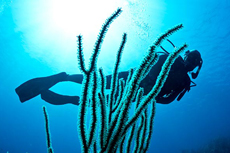 Roatan Scuba Diving cruise excursion