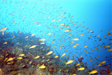 Safaga Red Sea Snorkeling