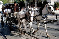 Saint John (New Brunswick) Horse Drawn Carriage