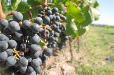 Saint-Tropez Winery