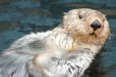 Sitka Sea Otter and Wildlife Quest cruise excursion