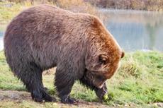 Sitka Wildlife Tour cruise excursion