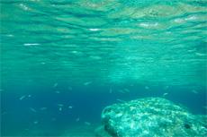 Sitka SeaLife by Sub
