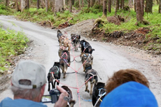 Skagway Dog Sledding cruise excursion