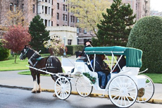 Victoria Horse-Drawn Carriage Tour