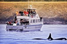 Victoria Whale Watching cruise excursion
