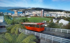 Wellington City Tour cruise excursion