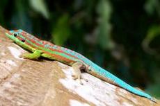 Wellington Kaiori Wildlife Sanctuary