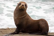 Wellington Seal Coast Safari